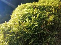 Vie verdâtre image stock