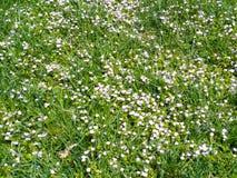 Vie verte, pelouse verte, concept de l'élevage d'usine, Photo stock