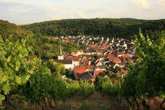 Viñedo Alemania Ramsthal Foto de archivo