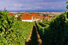 Viñedo de las uvas de vino en la puesta del sol, otoño en Francia Imagenes de archivo