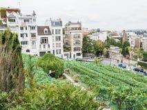 Viñedo visto de los jardines de Renoir, París de Montmartre Foto de archivo