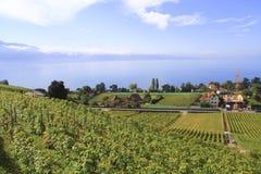 Viñedo y ciudad a lo largo del lago, Suiza Imagen de archivo