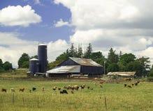 Vieh auf dem Bauernhof Stockbilder