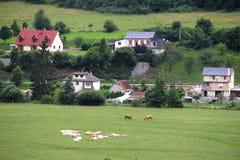Vieh, das auf Ackerland weiden lässt Stockbild