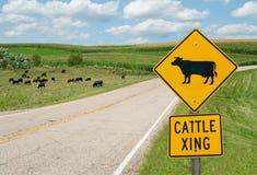 Vieh, das Zeichen kreuzt Lizenzfreie Stockfotos