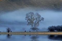 Vieh in der Landschaft lizenzfreie stockfotos