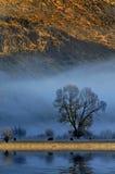 Vieh in der Landschaft Stockfotos