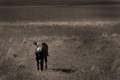 Vieh in der Landschaft lizenzfreie stockfotografie
