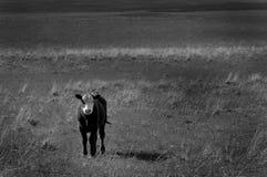 Vieh in der Landschaft stockbild