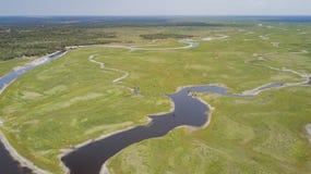 Vieh erhält Wasser vom Fluss Lizenzfreie Stockfotografie