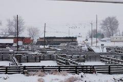 Vieh-Federn und Lokomotiven Lizenzfreie Stockfotografie