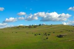 Vieh-Ranch Lizenzfreie Stockfotografie