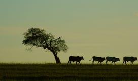 Vieh und Baum Stockbilder
