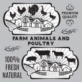 Vieh und Geflügel lizenzfreie abbildung
