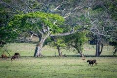 Vieh und Pferde, die auf Ranch in der ländlichen Landschaft weiden lassen lizenzfreie stockfotos