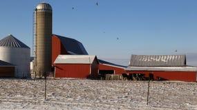 Viehbestand nahe einem ländlichen Bauernhof Stockfotos