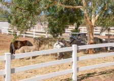 Viehbestand sperren ein Stockfotografie