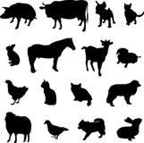Viehbestand und Geflügel Stockfotos