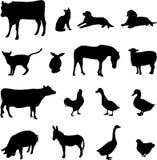 Viehbestand und Geflügel Lizenzfreies Stockbild
