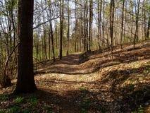 Viehleite Hill Pirna royalty free stock photography