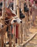 Viehmarkt in Bangladesh stockbild