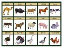 Viehvektor lizenzfreie abbildung