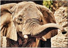 vieil éléphant Photo libre de droits