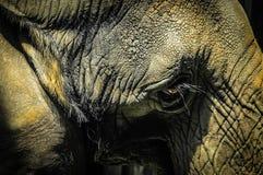Vieil éléphant Image stock