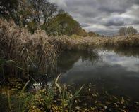 Vieil étang Images libres de droits