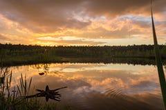 Vieil accroc sur le lac Images libres de droits