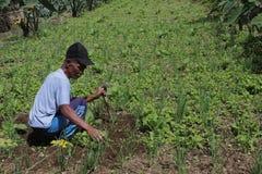 Vieil agriculteur Images libres de droits