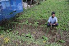 Vieil agriculteur Images stock