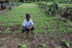 Vieil agriculteur Image stock
