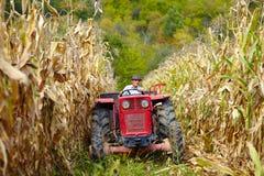 Vieil agriculteur conduisant le tracteur dans le champ de maïs Photo libre de droits