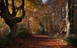Vieil arbre à l'automne Photos stock