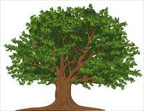 Vieil arbre illustration stock