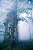 Vieil arbre Photos libres de droits