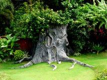 Vieil arbre Photographie stock