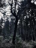 Vieil arbre Image stock