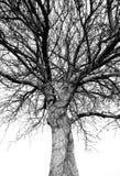 Vieil arbre Photographie stock libre de droits