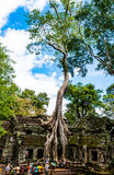 Vieil arbre au temple de Prohm de ventres Image libre de droits