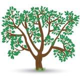 Vieil arbre avec des feuilles Photo libre de droits