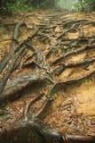 Vieil arbre avec des fonds d'enroulement Photographie stock