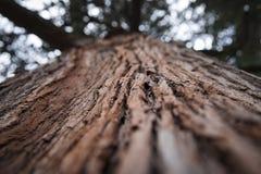 Vieil arbre brun Image stock