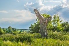 Vieil arbre cassé dans un pré images stock