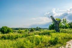 Vieil arbre cassé dans un pré image stock