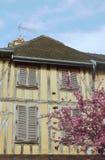 Vieil arbre d'appartement et d'amande de floraison Photo libre de droits