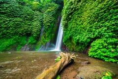 Vieil arbre dans l'eau près de la cascade de Munduk photo stock