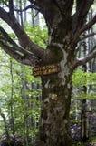 Vieil arbre dans la forêt de parc de Vitosha Natioal dans le signe de la voie Bulgarie Images stock