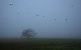 Vieil arbre dans le domaine par jour brumeux Images libres de droits